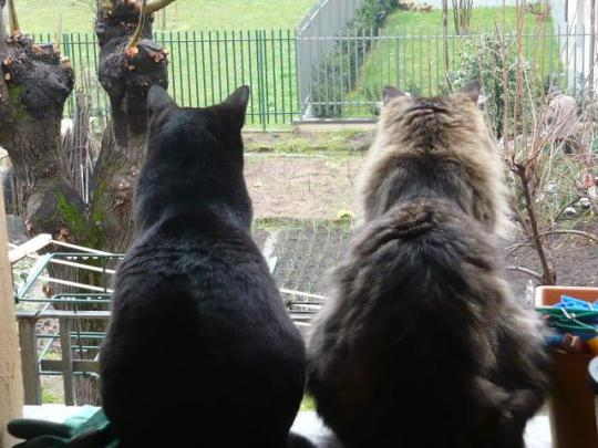 gatti sul davanzale